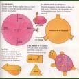 Comment faire une tortue en papier