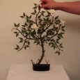 Origami bonsai tree instructions