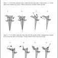 Origami tyrannosaurus rex instructions